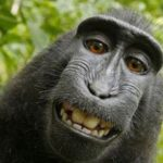 April 2017 NH Real Estate Law Alert – Private road maintenance; Education property tax exemption; Amazing but true – monkey selfies
